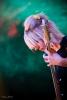 Billie - Festival Paroles et Musiques